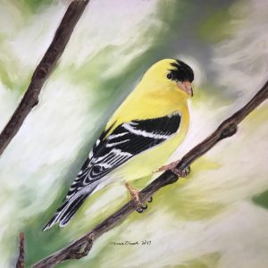 American Goldfinch (16x13 1:2)