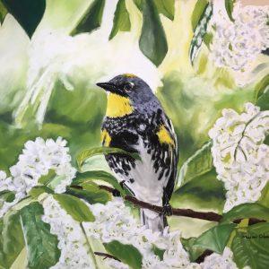 Audubon's Warbler (16x12 1:2)