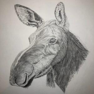 Cow Moose (22x23 1:2)