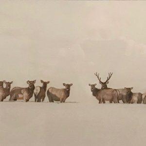 Elk Herd (Sold)