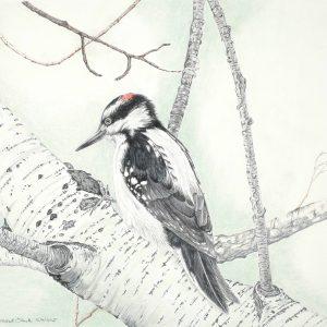 Hairy Woodpecker (Sold)