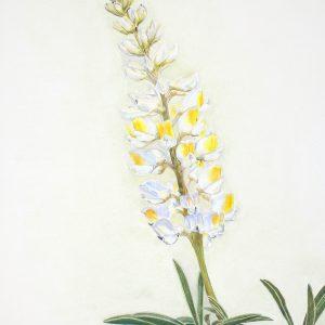 Longspur Lupine, Lupinus arbustus