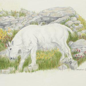 Mountain Goat (13 1:2x8)
