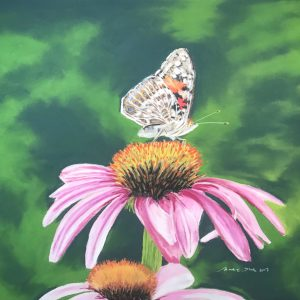 Painted Lady on Echinacea.(23x17)