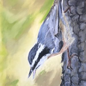 Red-Breasted Nuthatch (7 1:2x16)
