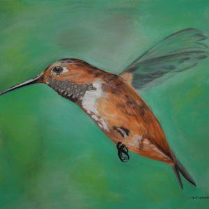 Rufous Hummingbird (17x11 1:2)