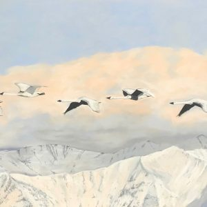 Trumpeter Swans above Silver Creek (63x23)