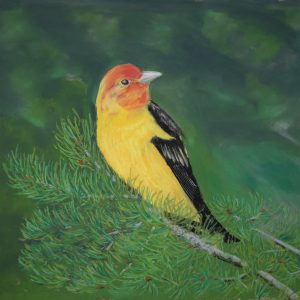 Western Tanager (19 1:2x14 1:2)