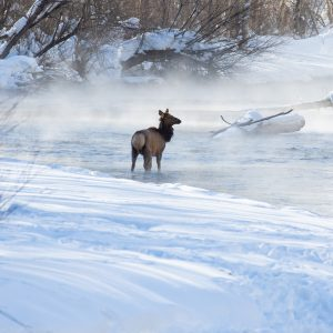 Cold Morning on the Big Wood River