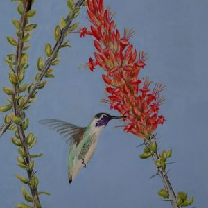 Costa's Hummingbird on Ocotillo (Sold)