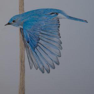 Bluebird & Mullein