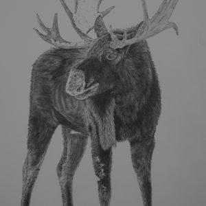 Head Full of Snow_graphite